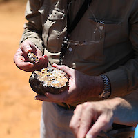 Geologist examining sample in the field
